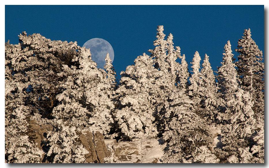 white&MoonBlog